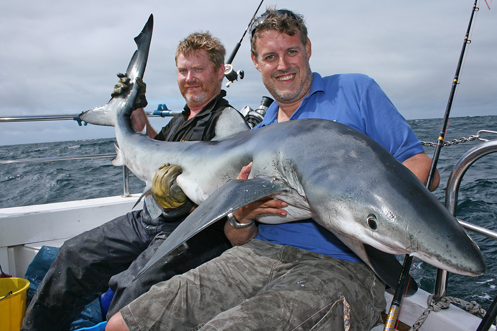 UK fish species: Blue Shark