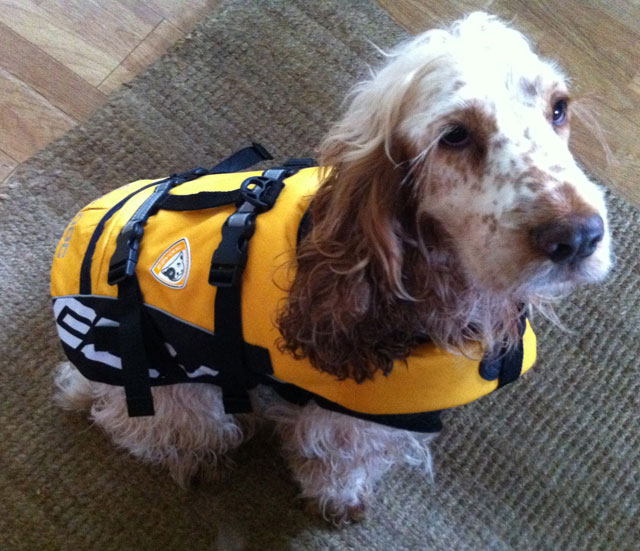 Dog lifejacket from Ezydog