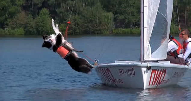 This amazing sailing dog can even trapeze!