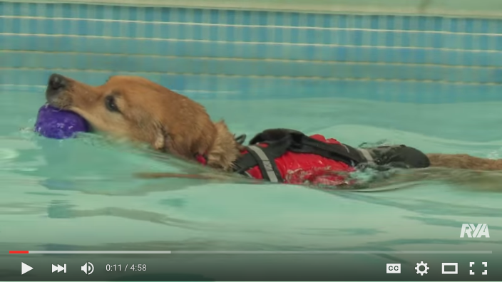 RYA dog lifejacket video guide.