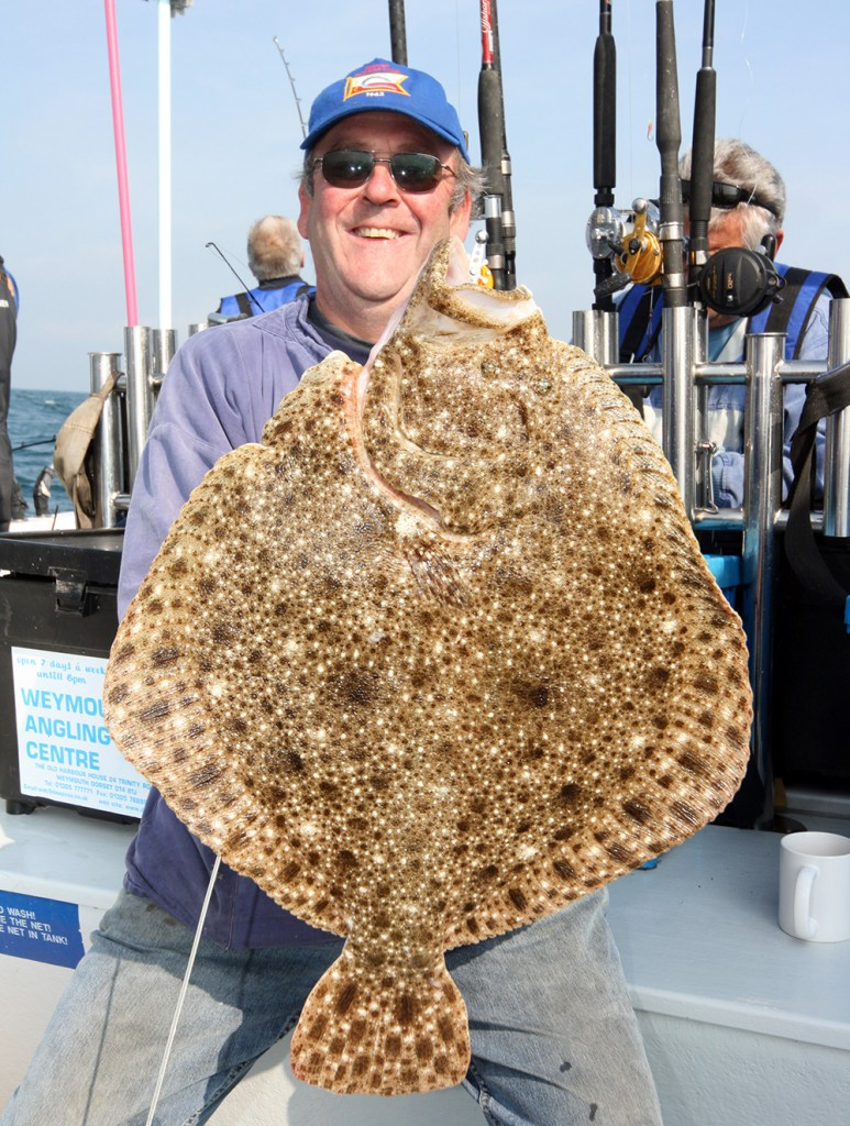 UK fish species: Turbot