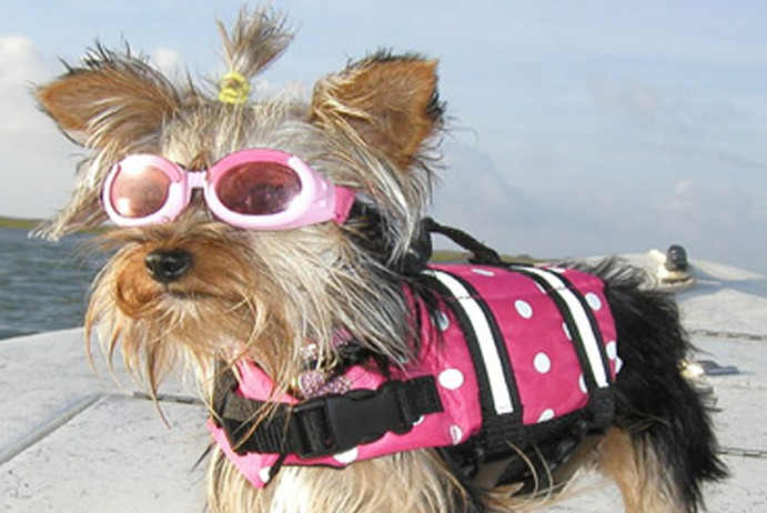 Doggy lifejackets