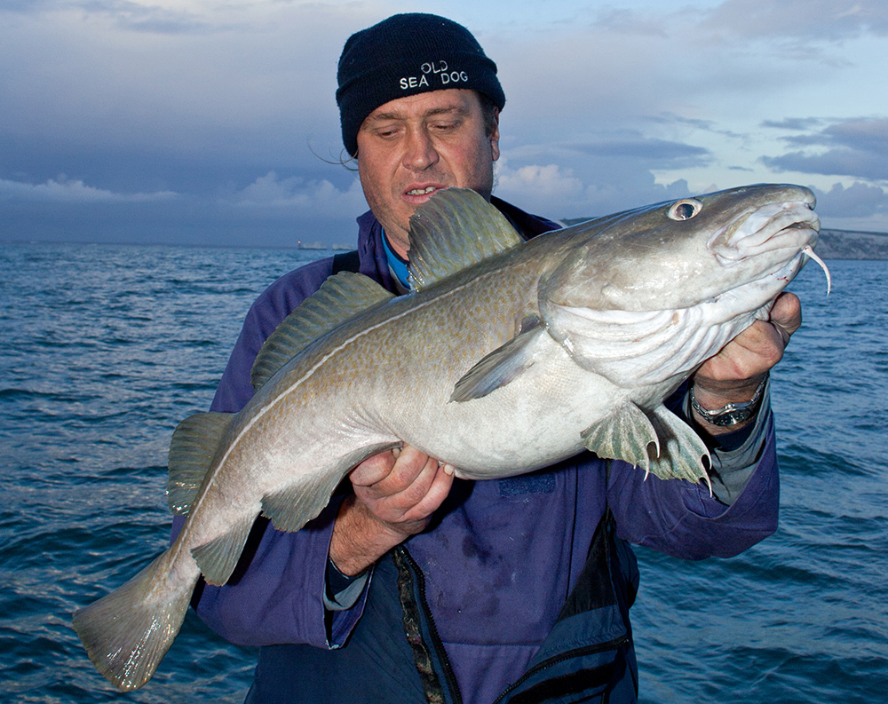 Uk fish species 10 key fish for boat anglers for What is cod fish
