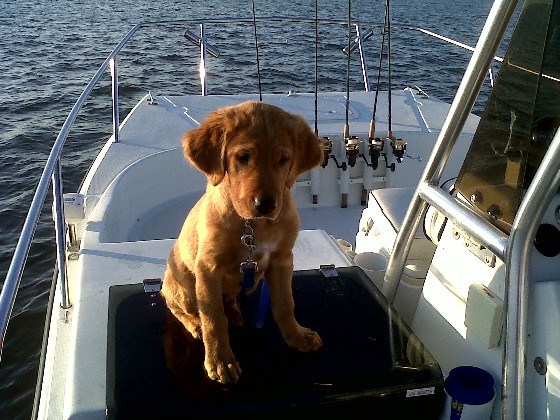 Taking your dog on a boat: best tips